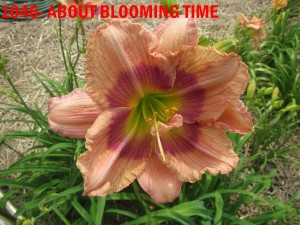 1046 - ABOUT BLOOMIN TIME