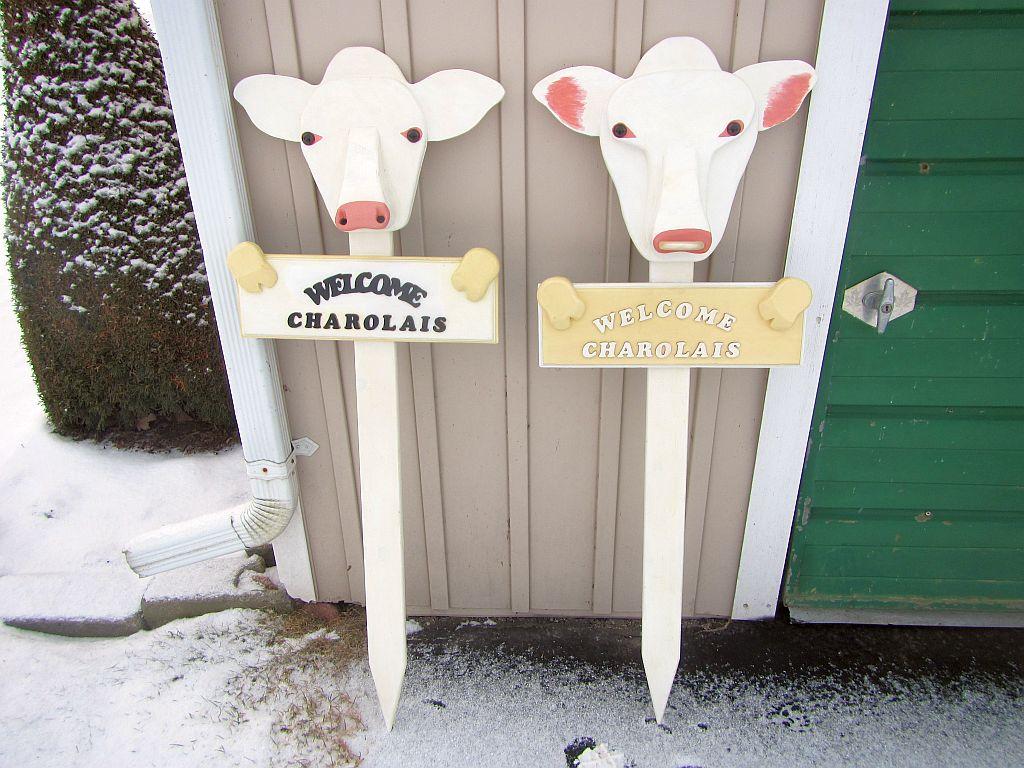 BULL & COW (3)