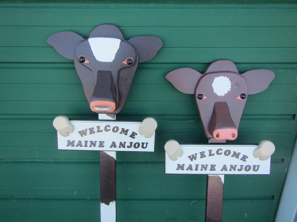 BULL & COW SIGNS