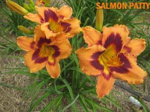 SALMON PATTY