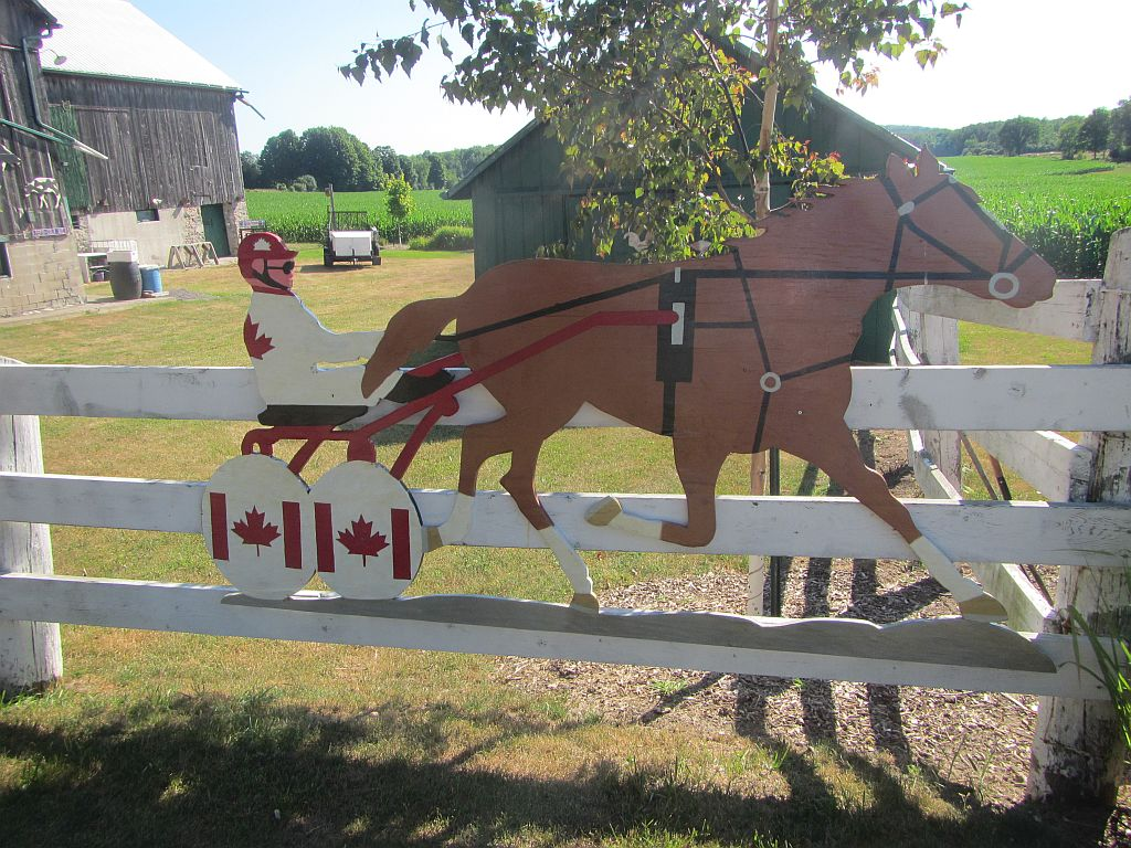 HARNESS HORSE - TROTTER